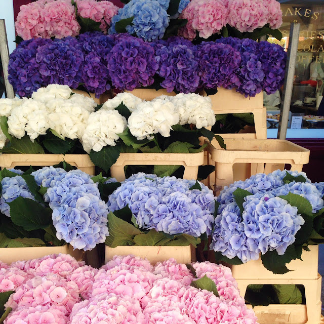 Hydrangeas at the Columbia Road Flower Market