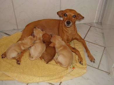 Pitchula e seus bebês
