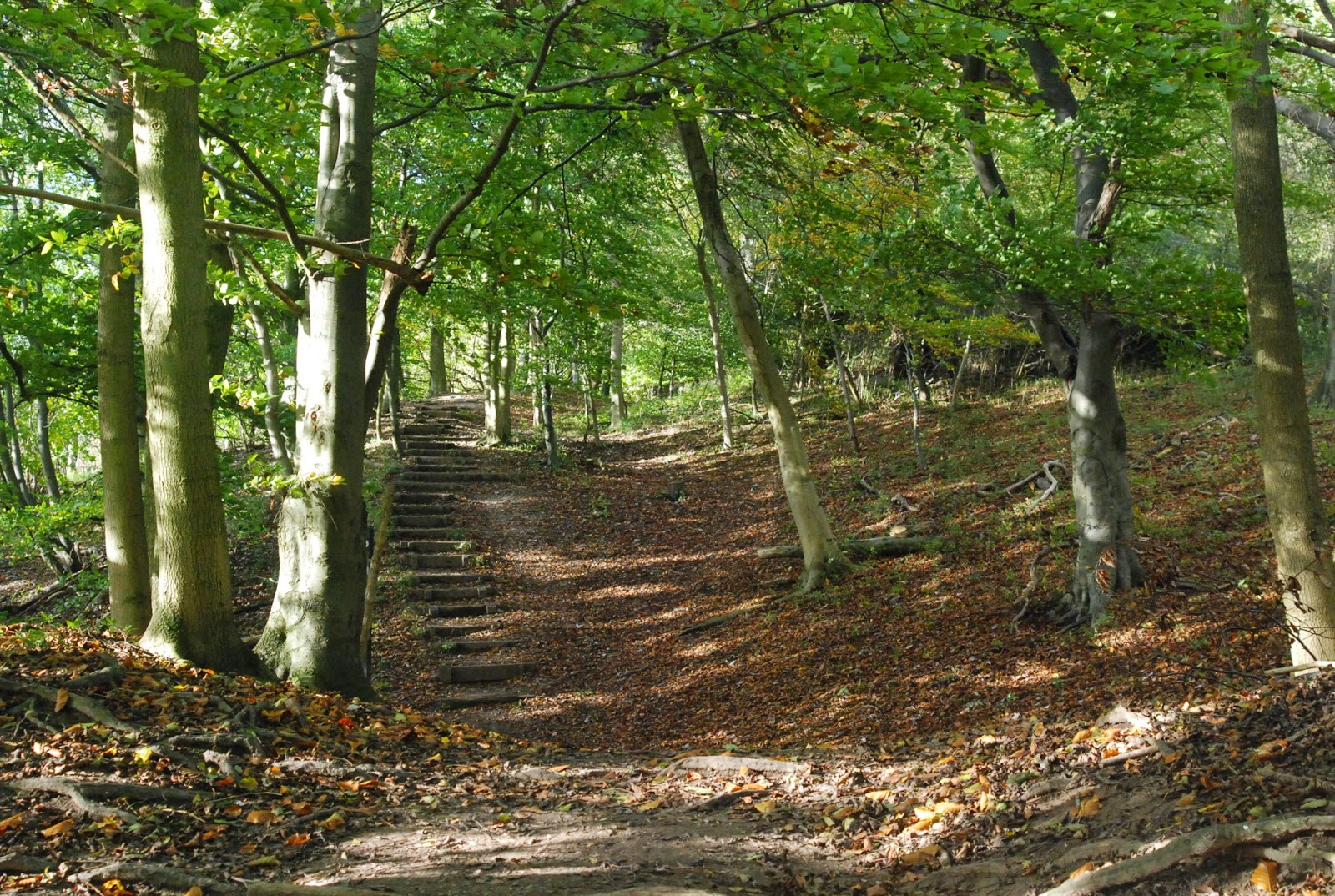 steps in Ashridge Forest- National Trust