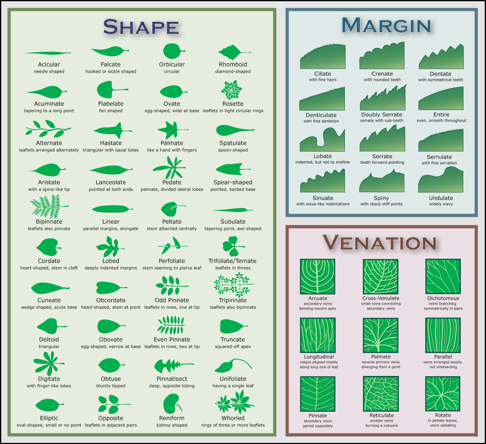 plant identification by picture