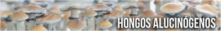 Hongos Alucinogenos Blog