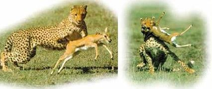 Pengertian Seleksi Alam dan Contohnya pada Makhluk Hidup