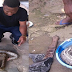 See The Big Snake That Was Killed For Pepper Soup -- ( GUYS WOULD YOU EAT THIS???)