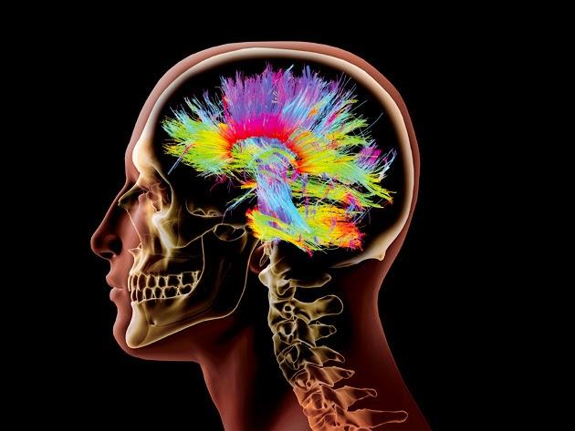 diferencias entre el cerebro de una mujer y el de un hombre.