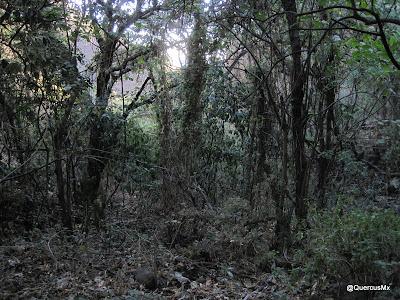 Barranco que da al arroyo el Tecuán - Jototepec