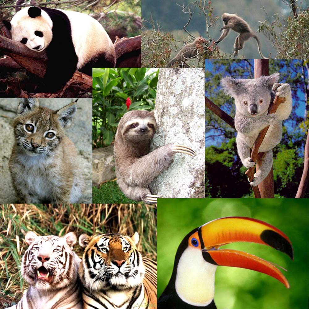 imagenes de animales de extincion - Animales en peligro de extinción El Informador