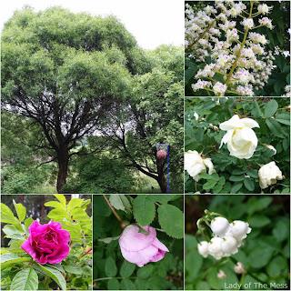 luonto, nature, kesä, summer