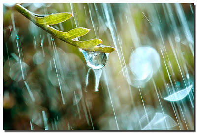 tips for photographing raindrops