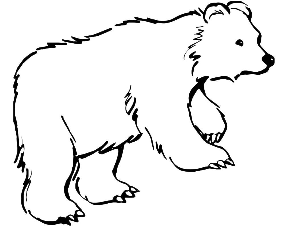 Disegni da colorare animali - Orsi polari pagine da colorare ...