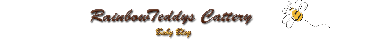 RainbowTeddy's Cattery blog
