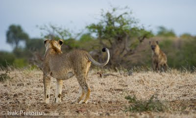 isak pretorius, c4 images and safaris, mashatu, photographic workshop,