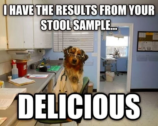 30 Funny animal captions - part 19 (30 pics), dog doctor meme
