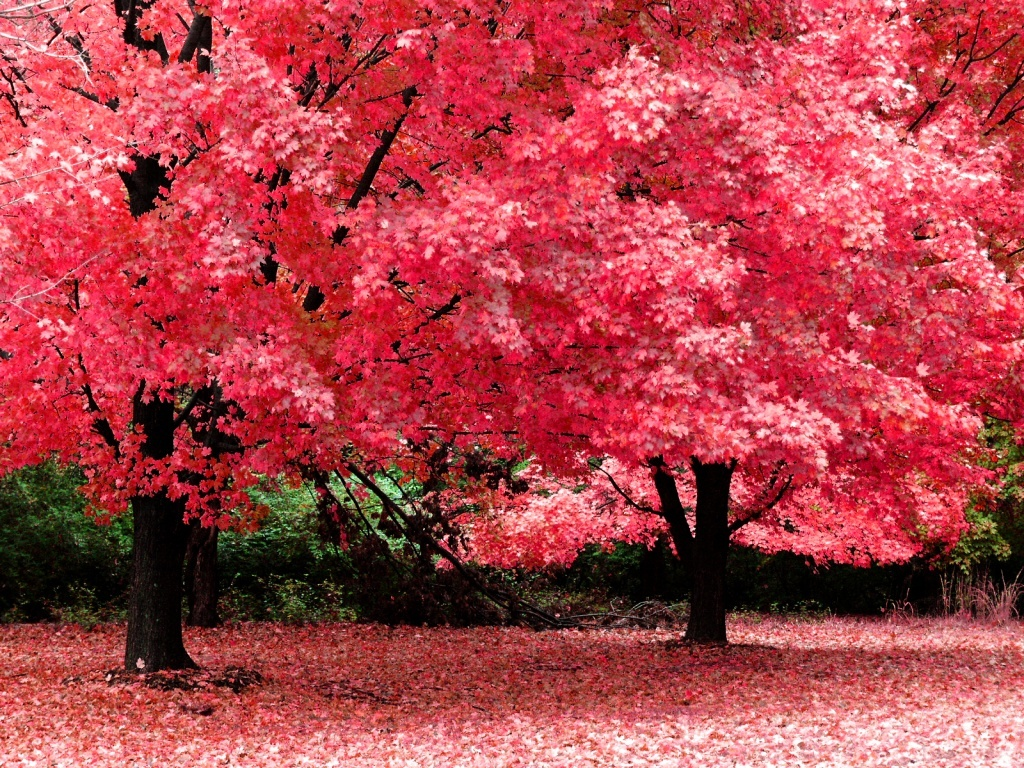 wallpapernarium arboles de colores