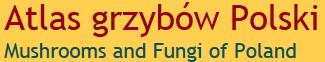http://www.grzyby.pl/