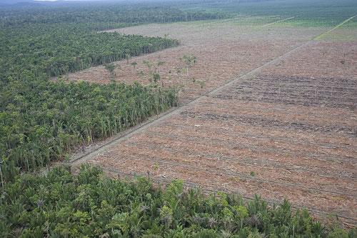 Pembukaan Lahan Food Estate di Merauke Tak Capai Target