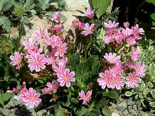 Crea tu jard n flores que crecen r pido en nuestro jard n for Arboles de hoja perenne que crece rapido