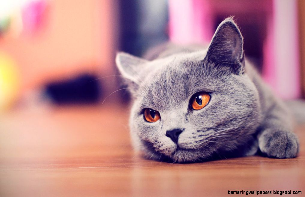 Cute cat wallpaper HD by AlexandruIuilian on DeviantArt