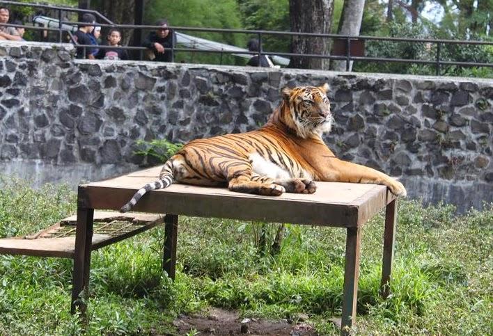 Tempat Wisata di Bandung Kebun Binatang Bandung