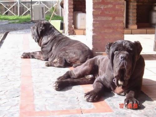 اسعار الكلاب 2019 لجميع الأنواع 8qegbn3r98yo6.jpg