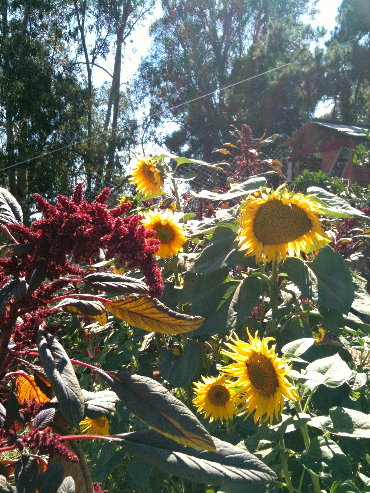Soul Flower Farm