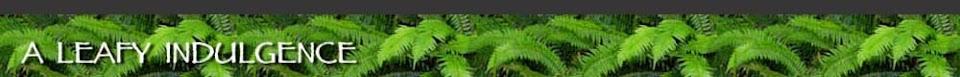 A Leafy Indulgence
