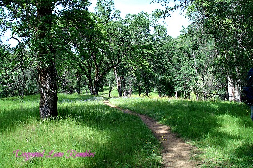 oak forest path dogwoodlanerambles.blogspot.com