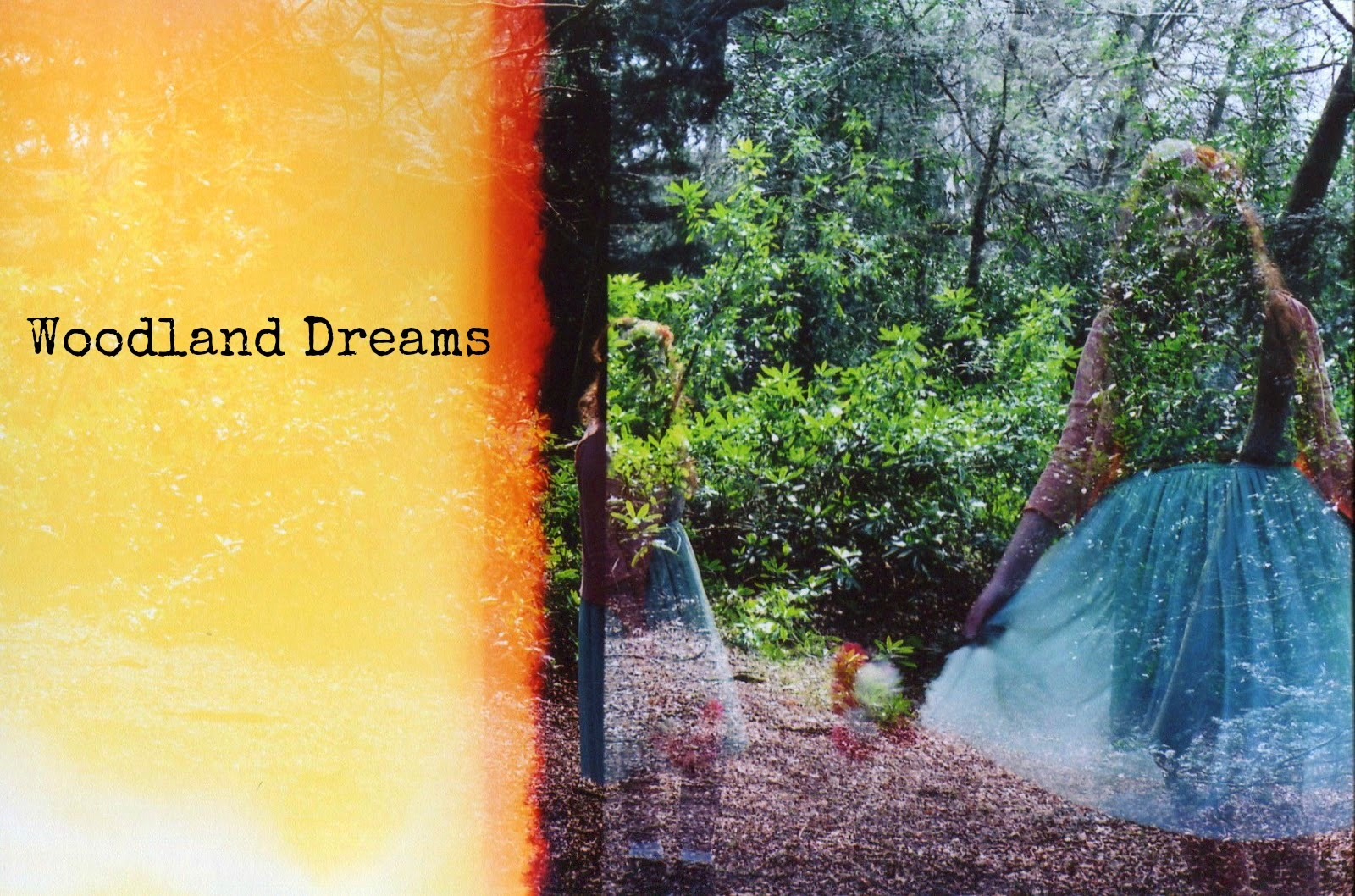 http://talesonfilm.blogspot.co.uk/2014/04/woodland-dreams.html