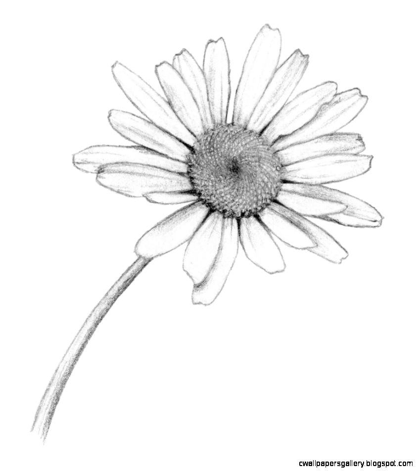 Daisy Flower Drawing Tumblr Sketch Coloring Page