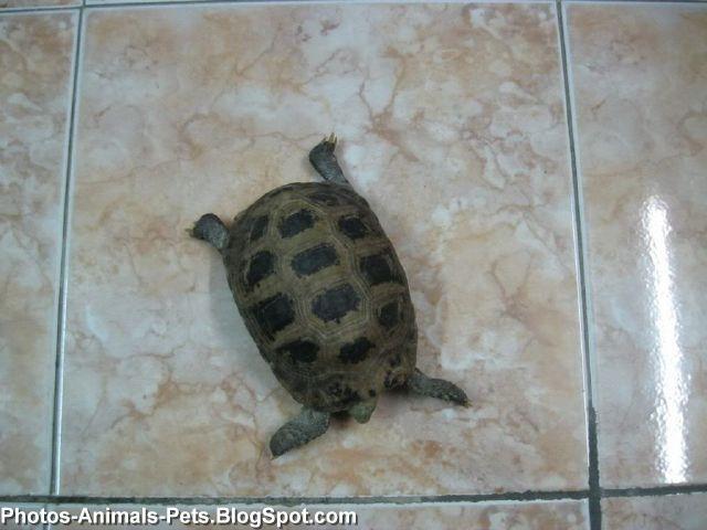 a pet turtle