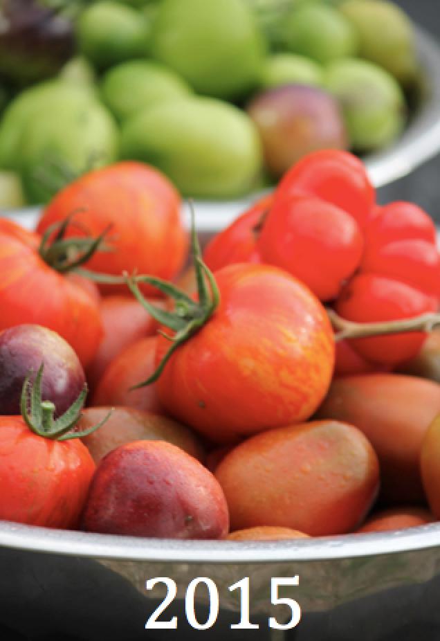 Om 2015 års tomatodling