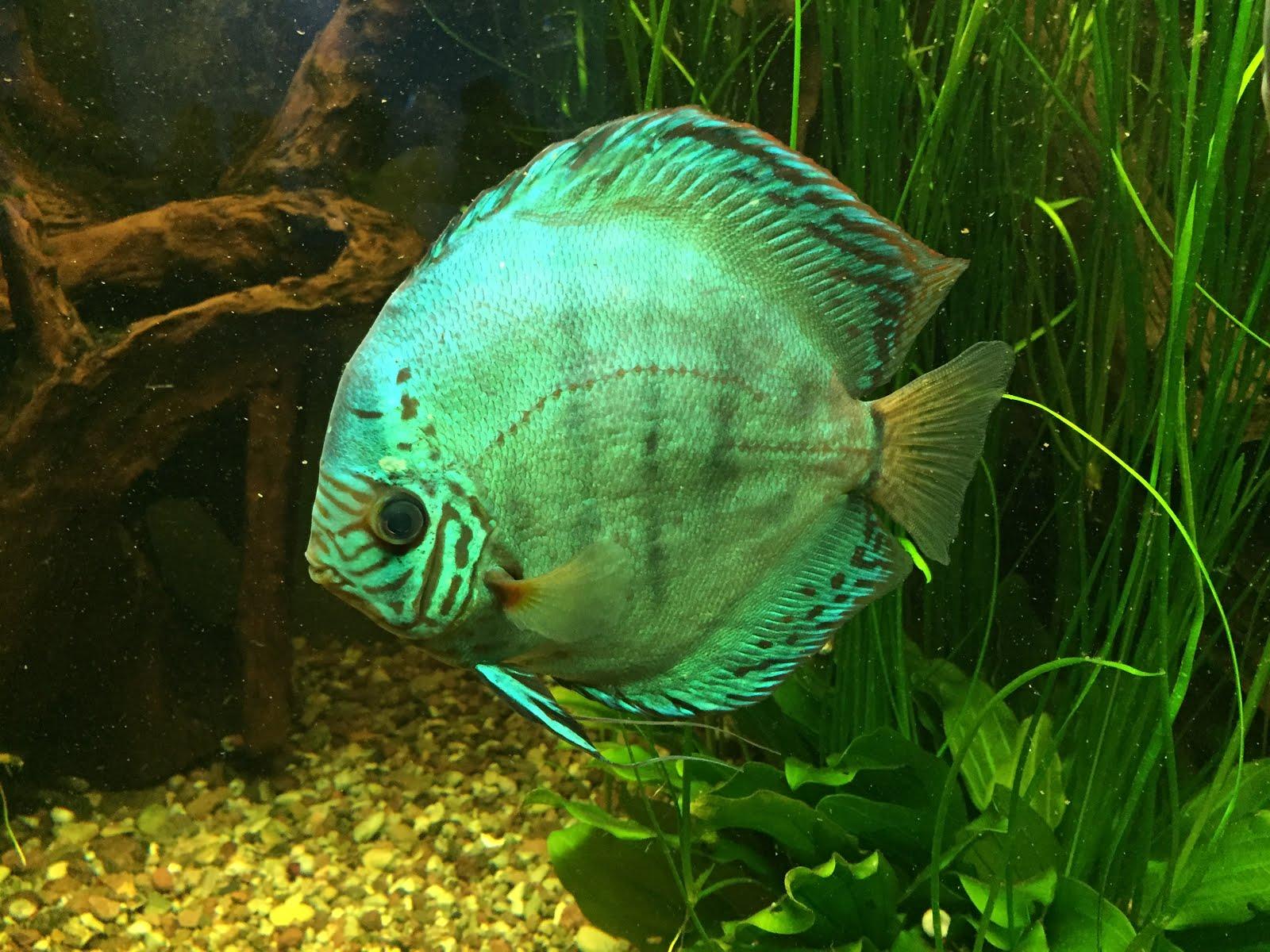 Kommen Sie mit ins Erfurter Aquarium