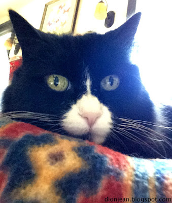 Maggie looking at the camera for her cat selfie