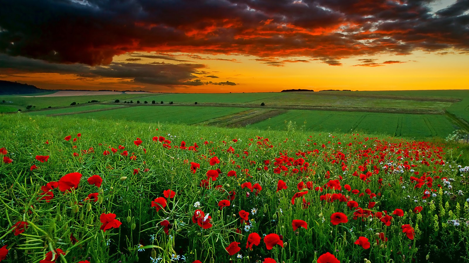 wallpapers world: super landscape of red flowers hd wallpaper
