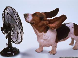 Chăm sóc thú cưng vào mùa hè