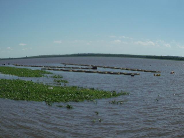 Cria peixe tilapicultura produ o de juvenis de til pias for Tanques para cria de tilapia