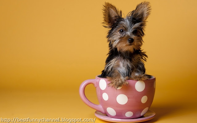 Funny dog in a cup.