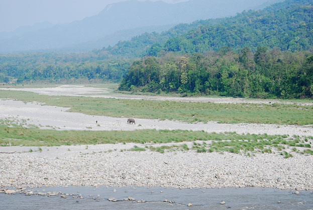 Manas Wildlife Sanctuary Assam