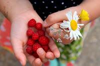 Vilde hindbær
