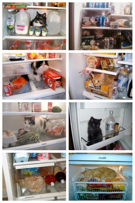 Los mejores escondites gatunos