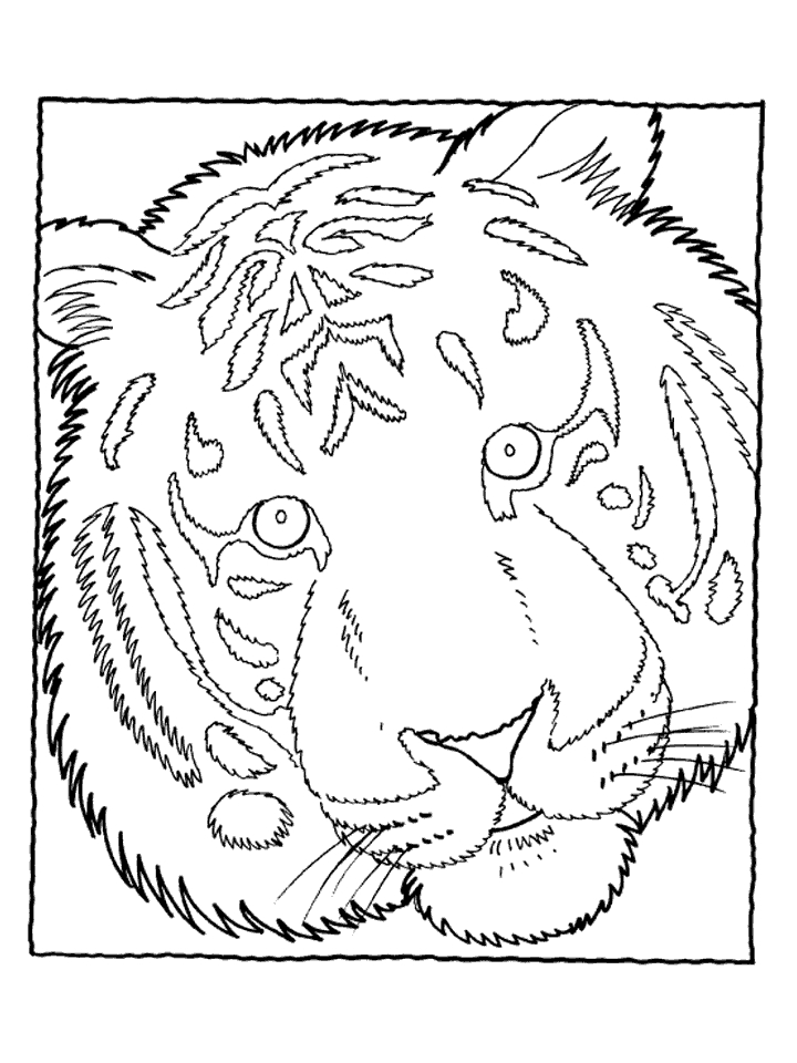 Tiger Pictures to Color | My Tiger Blog!
