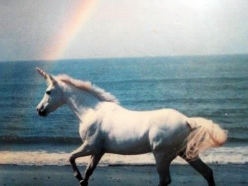 http://3.bp.blogspot.com/-dGHXo6cL1kI/UKUwdUz0QQI/AAAAAAAASGQ/u2lJ4WgubB8/s1600/unicorn14.jpg