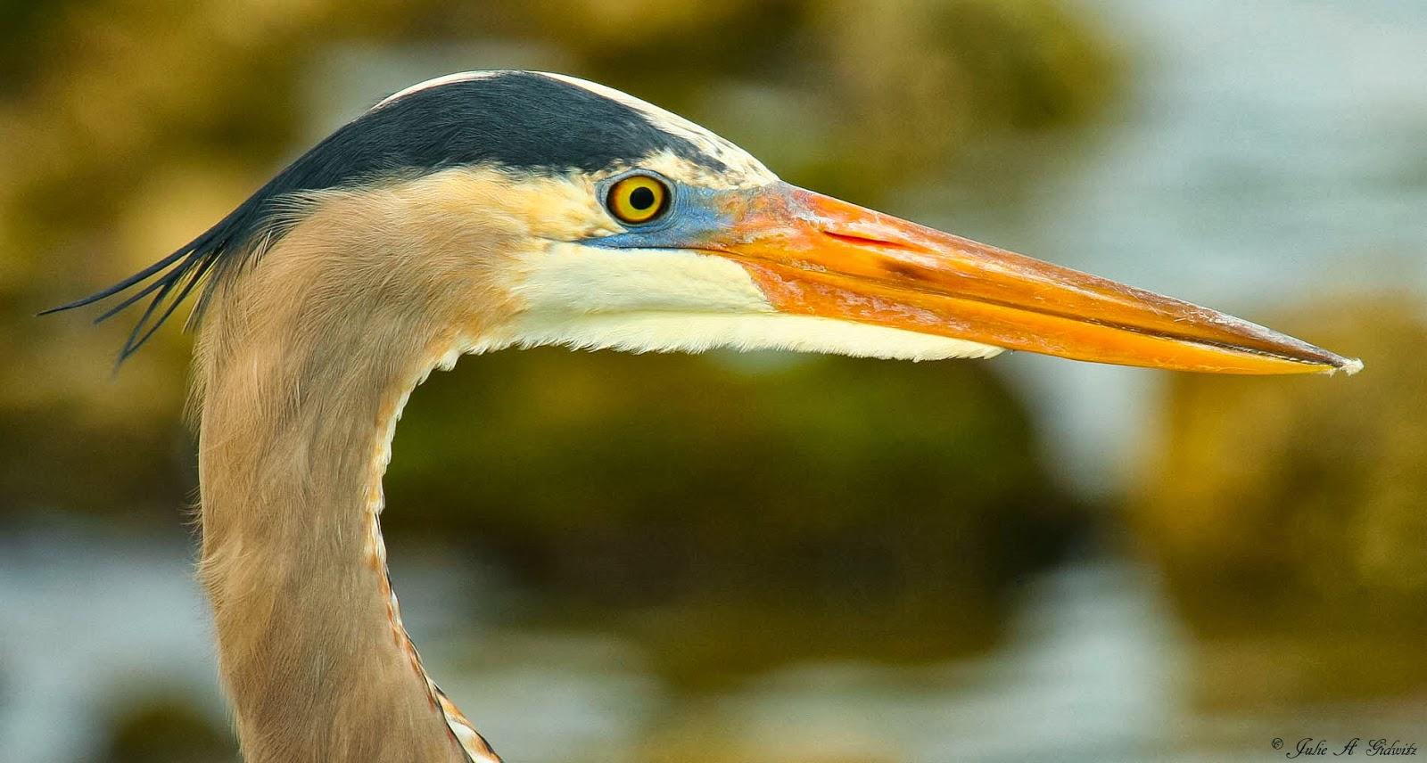 Birding Is Fun!: Suncoast Birds
