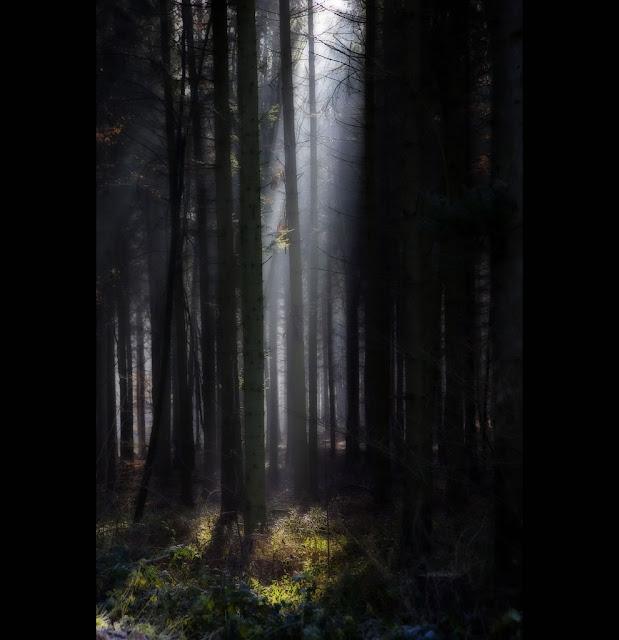 Black Forest S'mores Recipes — Dishmaps