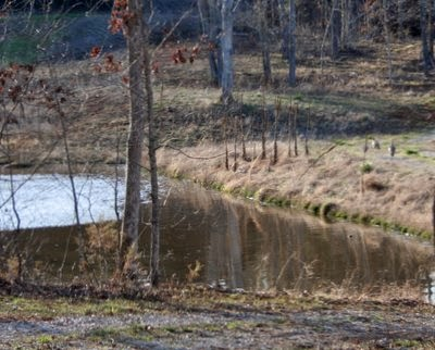 Wild turkeys near a manmade lake in the northern reaches of the Missouri Ozarks.