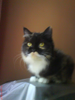Tips Cara Merawat Kucing