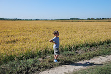 Fine settembre, trebbiatura del riso