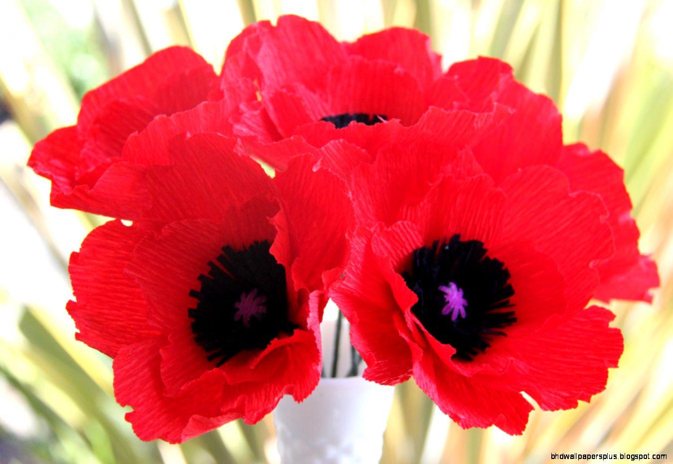 Poppy Flower Part 1  We Need Fun