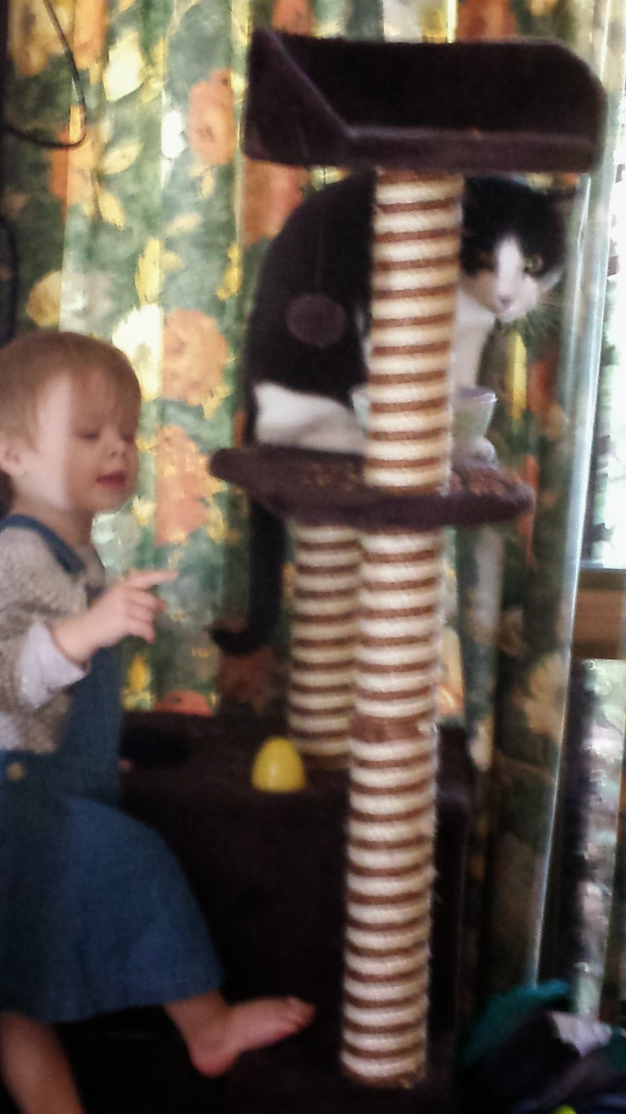 Image Mr Bumpy in cat tower, baby Joey starting to climb tower.