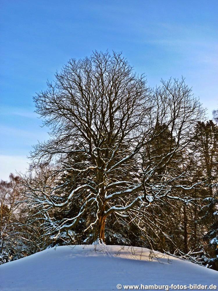 Schneebedeckter Baum im Winter auf dem Ohlsdorfer Friedhof in Hamburg