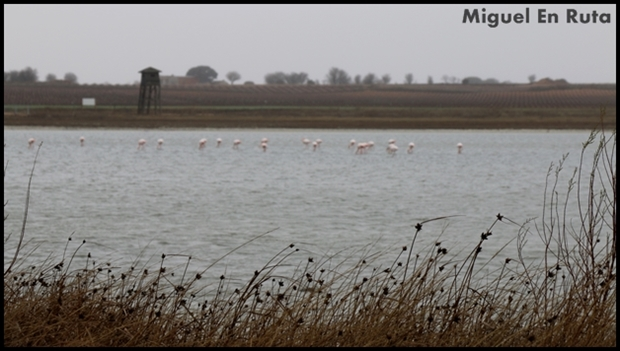 Laguna-de-Manjavacas